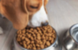Best_dog_food_for_beagles_pet_struggles.