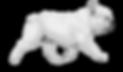 french%20bulldog%20run_edited.png