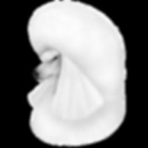 poodle_standard_head.png