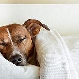Sleeping respiratory rate dog