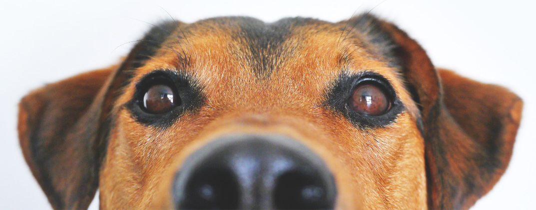 adorable-blur-breed-close-up-Photo%20by%
