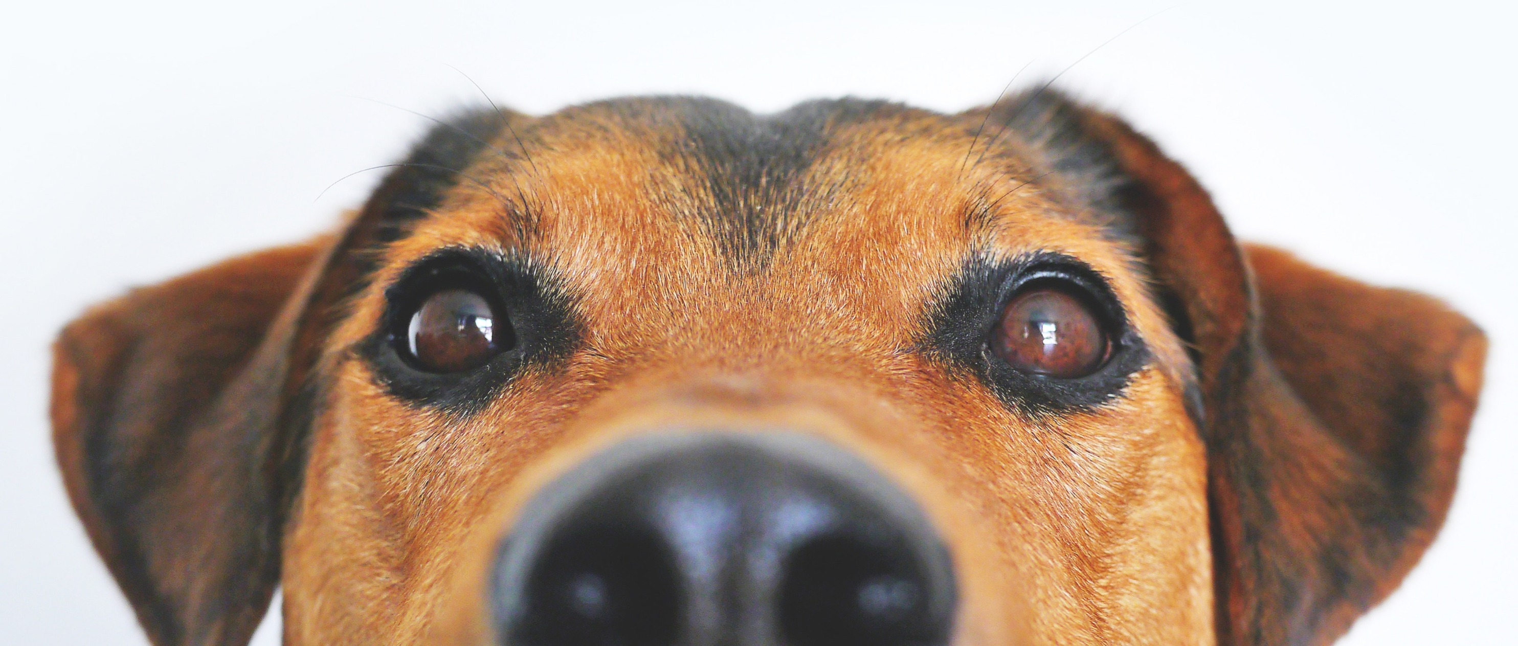 adorable-blur-breed-close-up-Photo by Lu