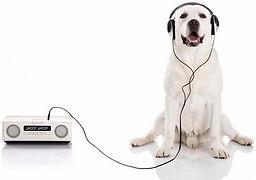 dog-with-headphones-radio740w.jpg