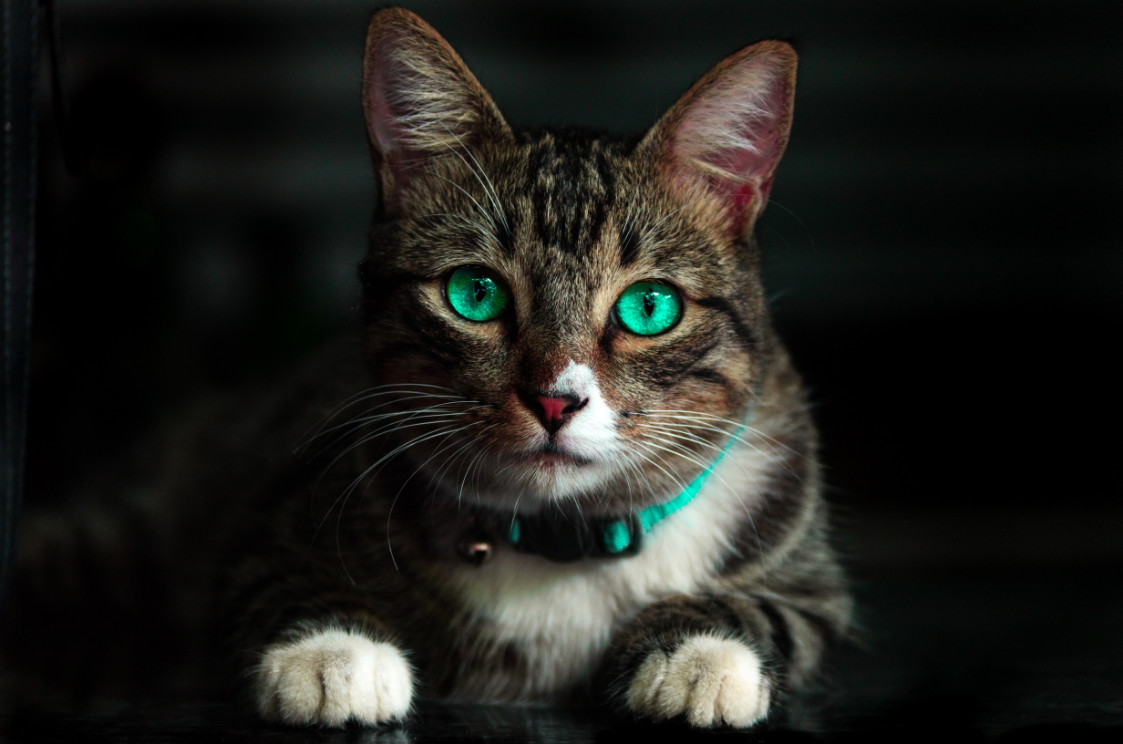 adorable-animal-blur-cat-617278-Photo by