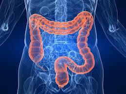Imagen en 3D del intestino grueso