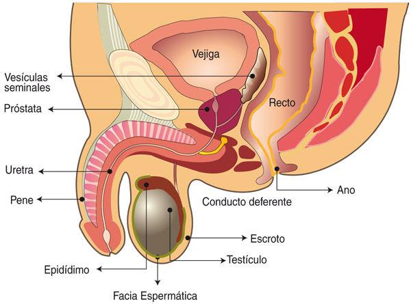 Enfermedad benigna de próstata