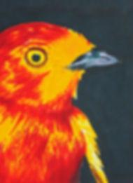 drawing, pen drawing, colourful drawing bird, bird drawing, drawing classes, drawing workkshop, drawing classes london, drawing classes south london, one-to-one drawing classes, drawing tutorial