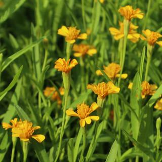Citizen Farm's Soil Based Garden