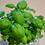 Thumbnail: Edible Garden City RGB Grow Kits