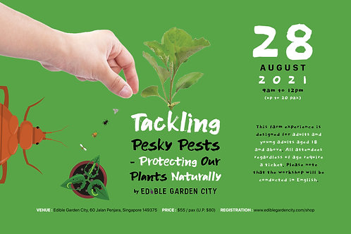 Tackling Pesky Pests - Protecting Our Plants Naturally