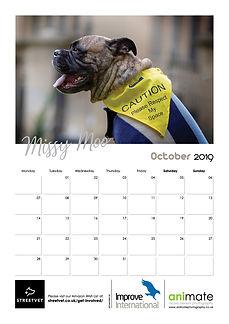 StreetVet Calendar V411.jpg