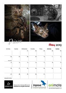 StreetVet Calendar V46.jpg