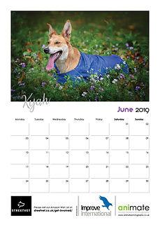 StreetVet Calendar V47.jpg