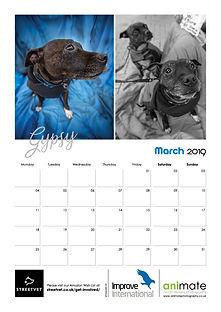StreetVet Calendar V44.jpg