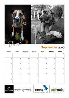 StreetVet Calendar V410.jpg