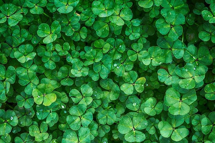 clover-1225988_1920.jpg