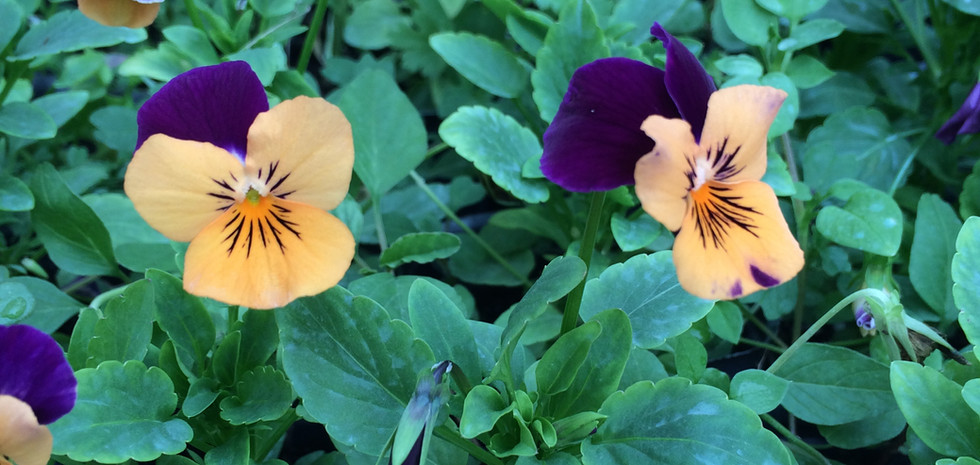 Flores en macetas