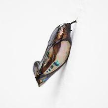 2009 Brazil Contemporary, Nederlands Fotomuseum, Roterdam  2005 Galerie du département d'arts plastiques et Bibliothèque – Université de Paris 8 à Saint Denis, Paris, France (part of France's Year of Brazil) 2005 Conjunto Cultural da Caixa, São Paulo, Braz