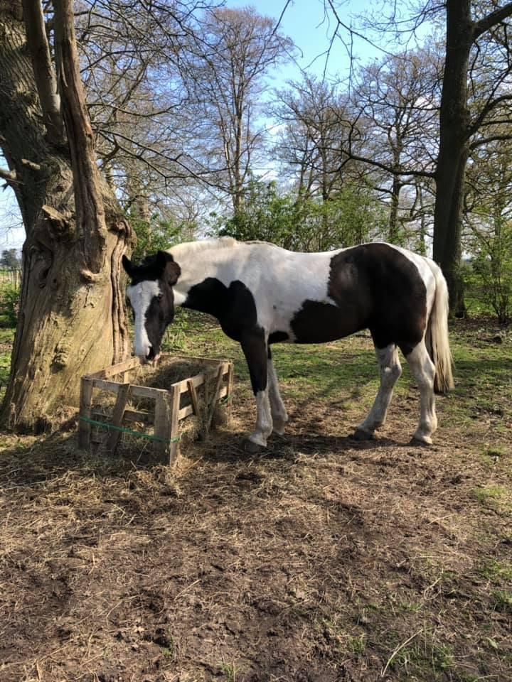 Equestrian/Livestock Maintenance Visit