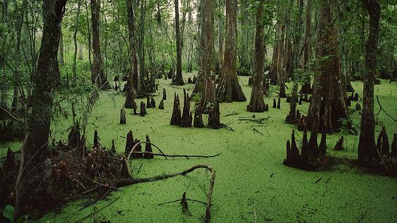swampy swamp.jpg