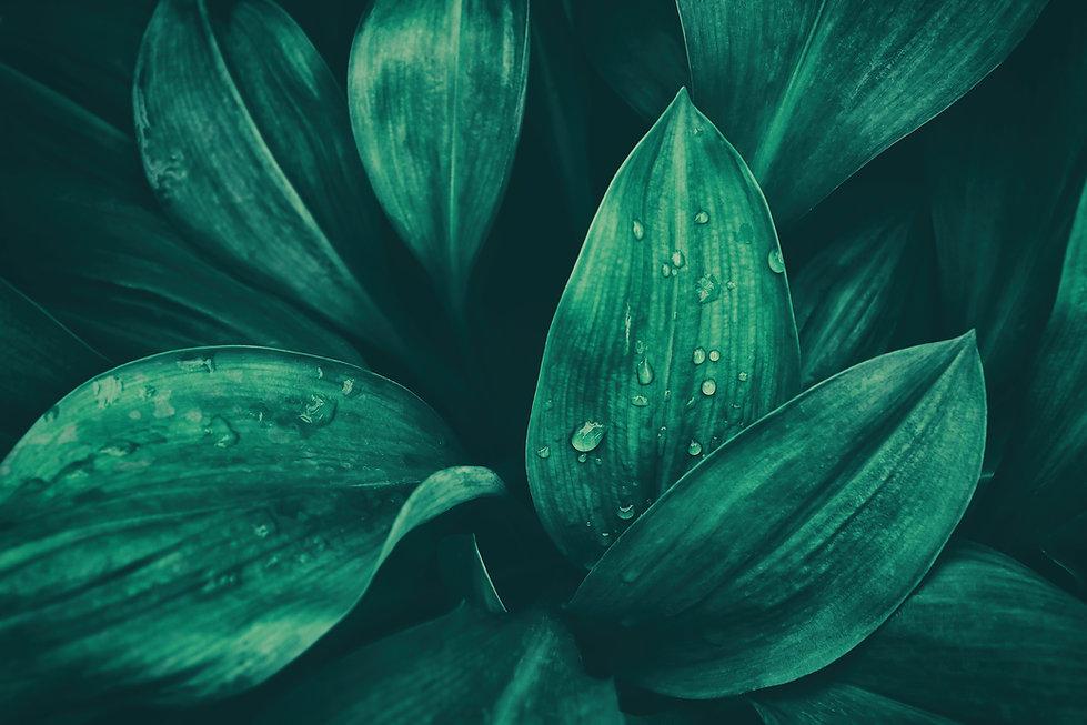 rainy season, water drop on lush green f