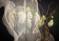 Composition d'orchidées emballée dans notre tissus