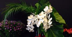Composition de branches d'orchidées
