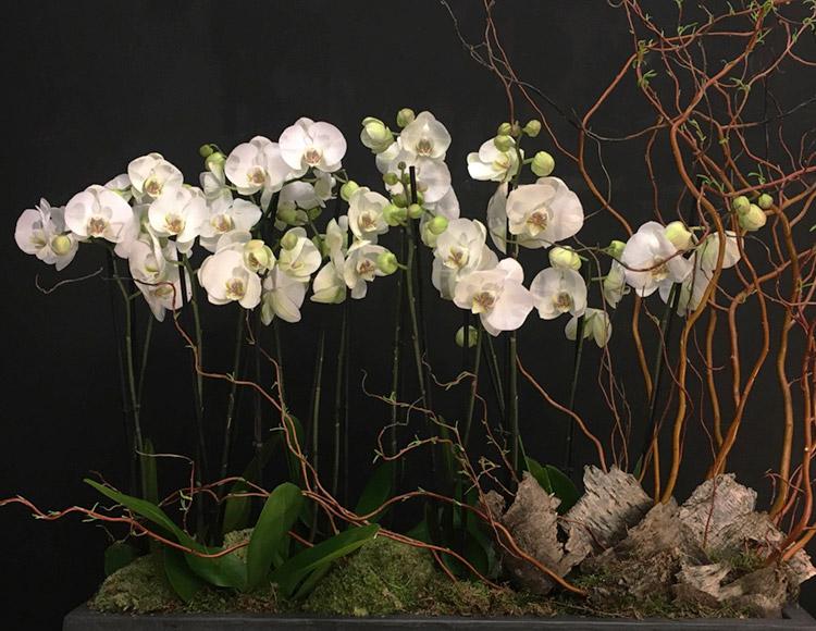 Orchidées de prestige
