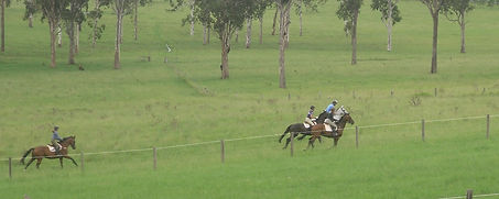 gallop-group.jpg