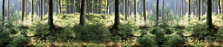 Plane Wald 1500x320 cm