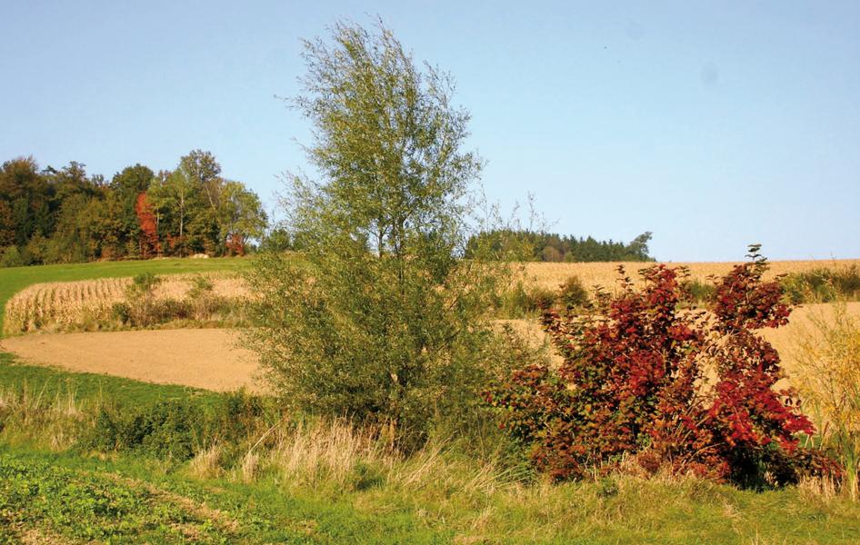 Plane Feld und Wald 500x318 cm