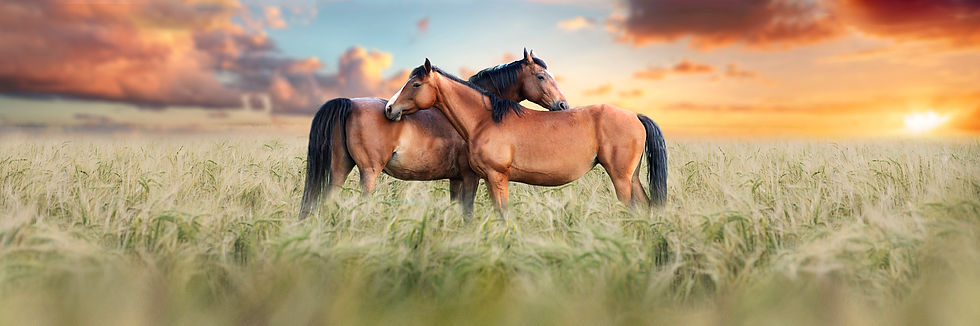 horses1jpeg.jpg