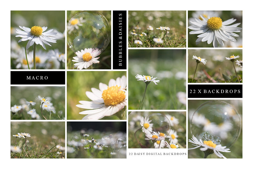 Macro daisy & bubble digital backdrops for Photoshop composites by Makememagical