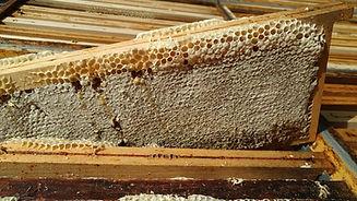 Miel de bruyère blanche KLUGE AJK Miels récolte 2021