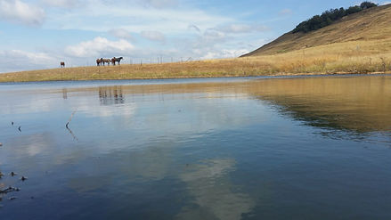 Horses at Spring Grove Dam edge
