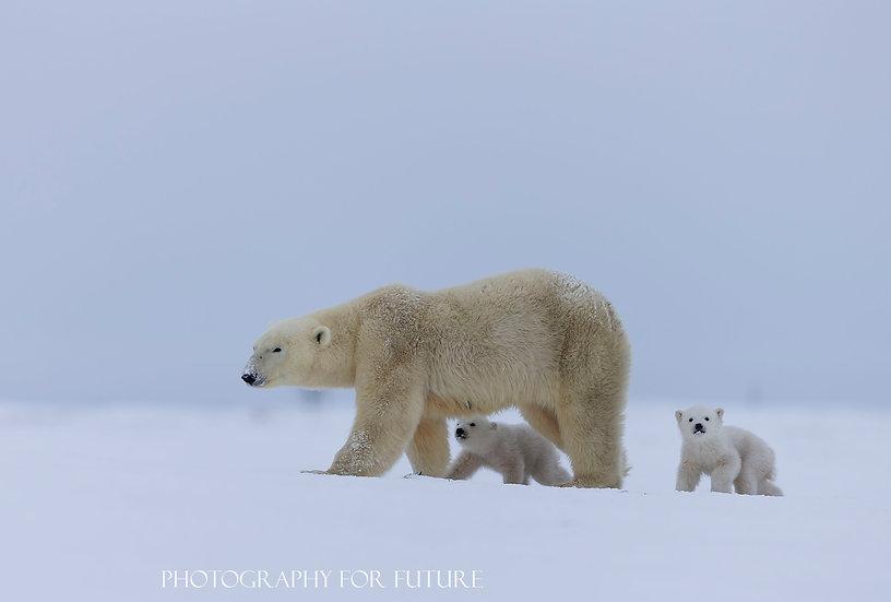 Tundra Journey