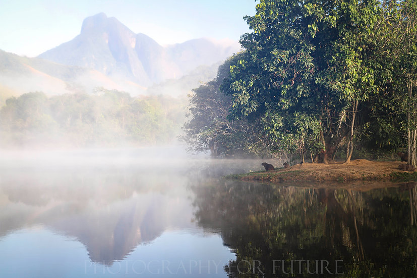 REGUA - The return of the Atlantic rainforest