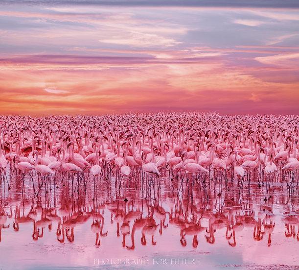Flamingo's sunset