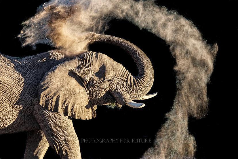 Namibian Dust Bath
