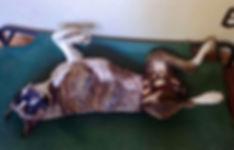 Waggin Wear panties for female dog in season