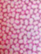 Waggin Fabric 6.jpg