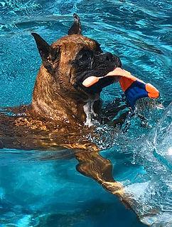 LEvi Swimming.jpg