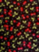Waggin Fabric 5.jpg