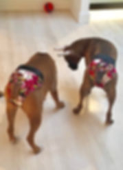 Waggin Wear for Dogs dog panties for house training customer photo