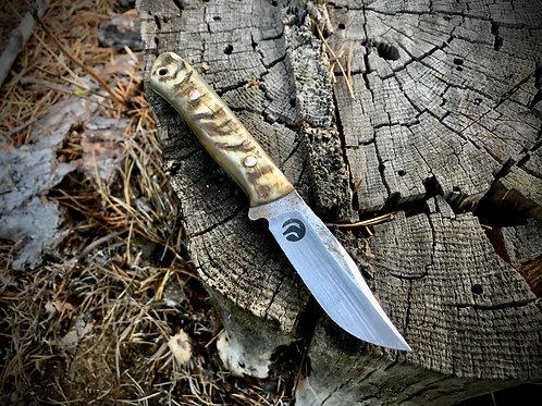 Blacktail Skinner-Ram Horn #3