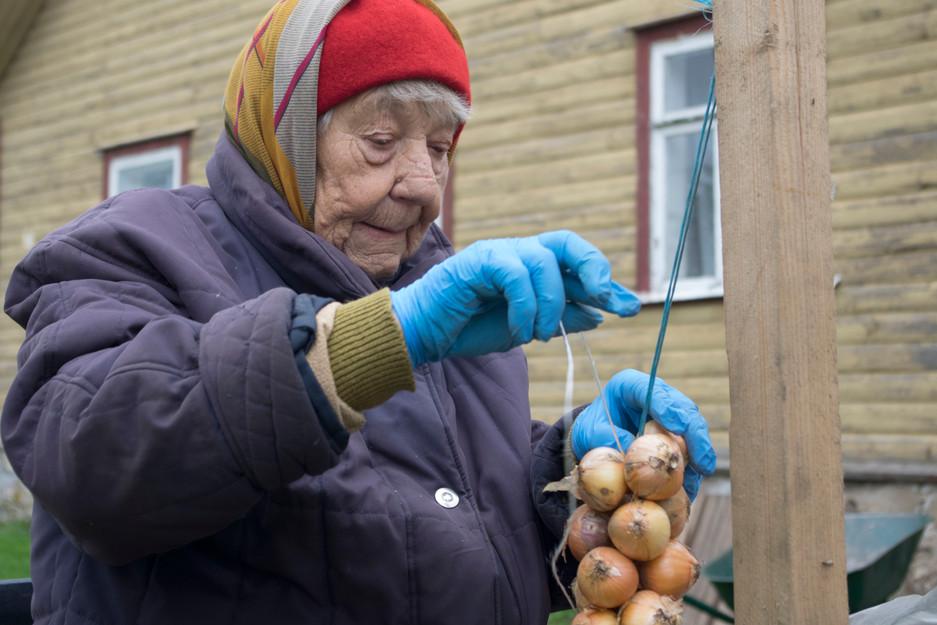 """Zwiebeln werden am Peipussee in Estland zu """"Zöpfen"""" gebunden"""