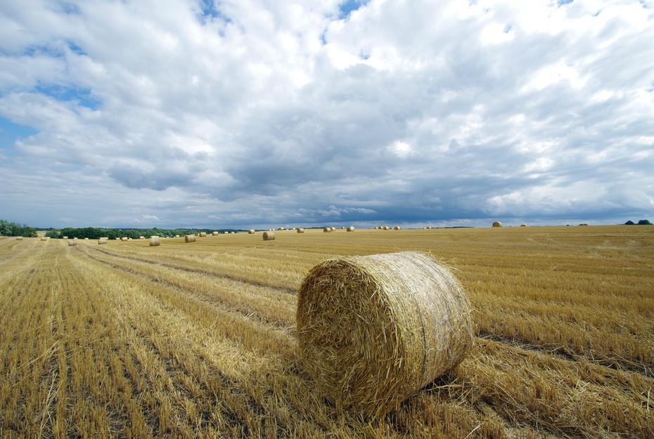 Ein großer Teil der Kornkammer Polens befindet sich in Mauren