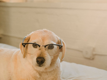 Creative Brain Games for Dogs