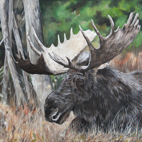 Bull in the Grass