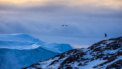 Greenland-8473.jpg